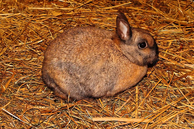 Kaninchenstall pflegen