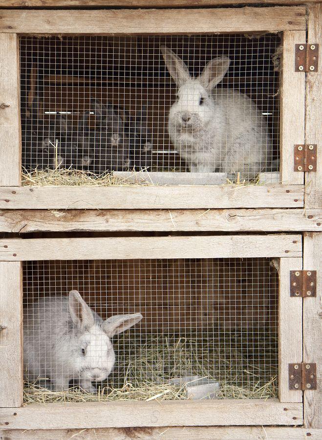 Kaninchenstall innen