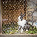Kaninchenstall draußen