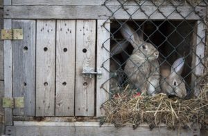 Kaninchenstall gebraucht