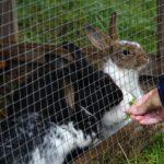 Kaninchenstall isoliert