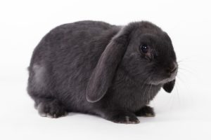 Kaninchen kaufen